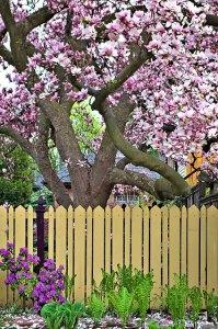 Žydint sodams, sveikinam Mamas. Michael Pardo nuotr. iš Flickr